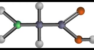 Aminokyseliny pod drobnohledem