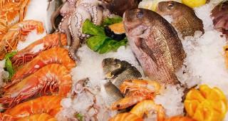 Ryby a jejich nutriční pozitiva