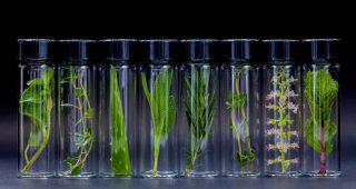 Význam a podstata fungování adaprogenů